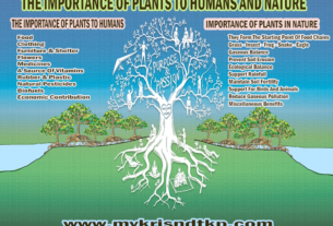 Importance Of Plants To Human And Nature